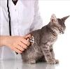 Ветеринарные клиники в Обнинске